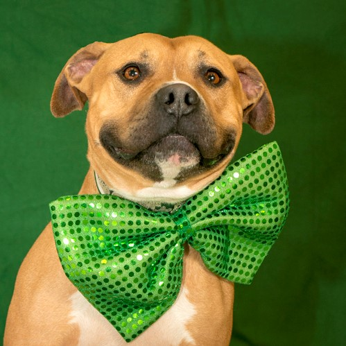 Dog in Green Bow Tie