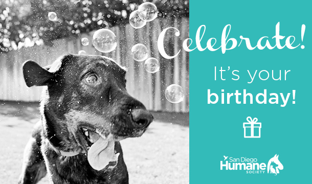 ecard birthday dog