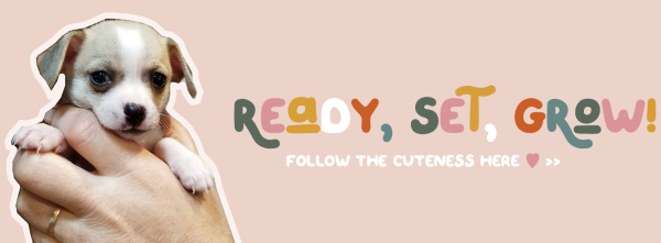 rsg_banner2.png